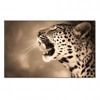 Tablouri canvas cu animale
